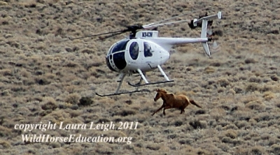BLM helicopter roundup 2011