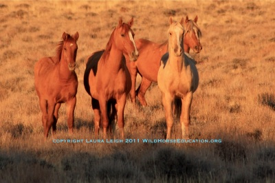 Wild Horses, Autumn sunset in the West